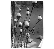~Frozen~ Poster