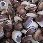 Moon Snails by May Lattanzio