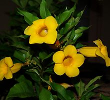 Allamanda vibrancy by ♥⊱ B. Randi Bailey