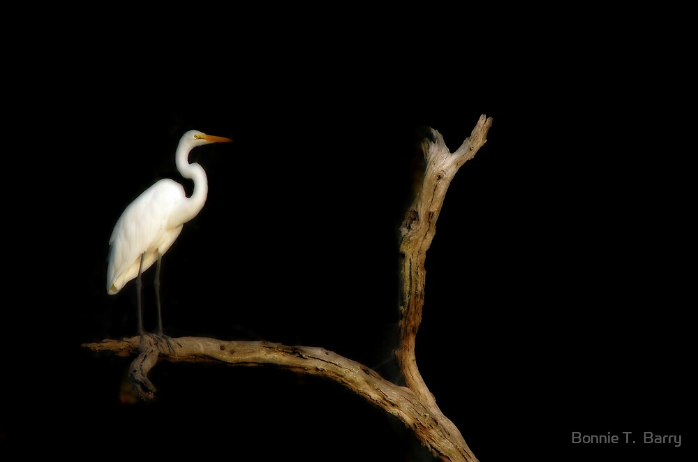 Egret in the Night by Bonnie T.  Barry