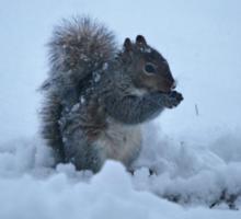 Squirrel in Snow - Series Sticker