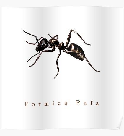 Formica Rufa or just Ant Poster