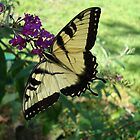 A Tranquil Moment With A Yellow Swallowtail  by Michele Ford