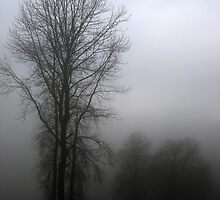 Trees and fog by Tamara Brandy