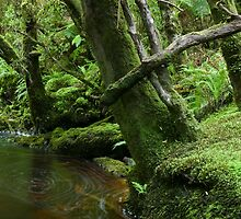 On the banks of the Bird River, Tasmania by tasadam