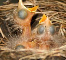 4 Blind Birds by Amy Polkowski