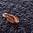 Ducking Rain by Tamara Valjean