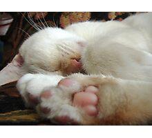 Pinkest Paws Photographic Print