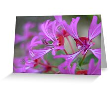 Ribbon Clarkia Greeting Card