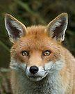 Red Fox portrait by GrahamCSmith