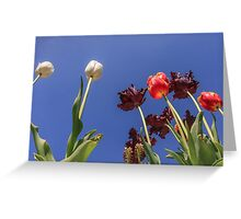 Tulips, tulips, tulips Greeting Card