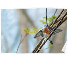 Fluttering Bluebird Poster