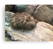 Snake Pile Canvas Print