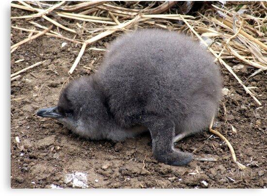 Baby Penguin by Sandra McNabb