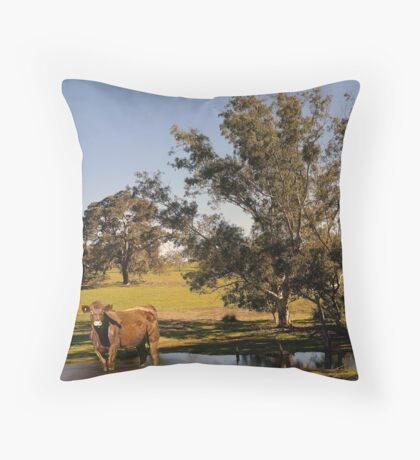 How now brown cow. 1000 views at 17 February 2013 Throw Pillow