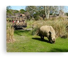 Rhinoceros at  the Disney Wild Animal Park.... Canvas Print