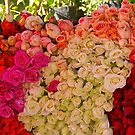 Marrakesh - Roses by Jean-Luc Rollier