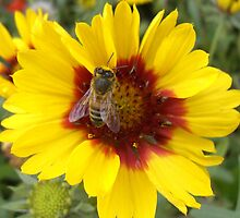 Honey Bee at work by Shenelle