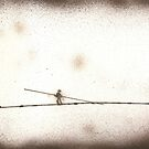 The tightrope walker by Daniele Lunghini