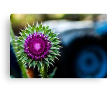 Thistle and Tractor Canvas Print
