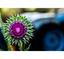Thistle and Tractor Photographic Print