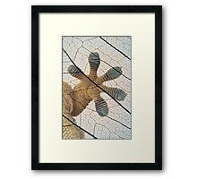 Gecko-paw Framed Print