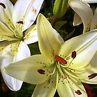 Christmas Lilies by Sarah Goldsworthy