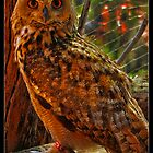 the eagle-owl's stare by chen cohen