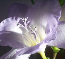 Freesia Flower by FelicityB