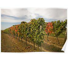Autumnal Vines Poster