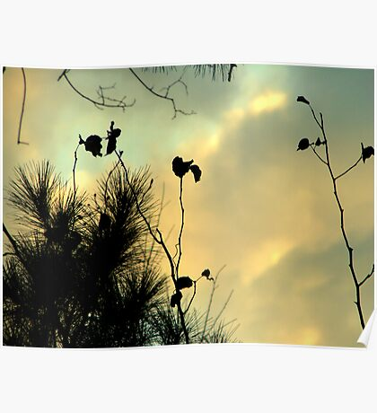 Pretty Sky and Silhouettes Poster