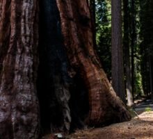 Old and New Trees in Yosemite Sticker