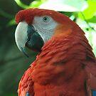 Parrot I by Tiffany  Nabors