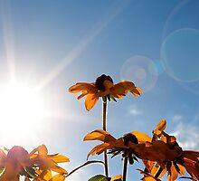 Spring by TimPalmer
