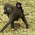 Baboon & baby - Tanzania Africa by Bev Pascoe