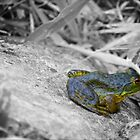 Ribbit 2 by lindsycarranza