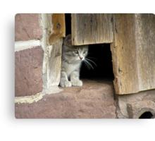 Schaefferstown Farm Kitty Canvas Print
