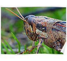 Grasshopper Macro Poster