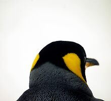 King Penguin by Tamara  Kenneally