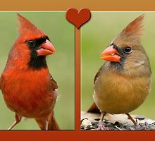 Mr. and Mrs. Cardinal by Bonnie T.  Barry