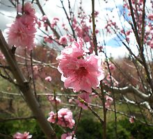 Blossom by Undecided