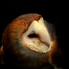 Barn Owl  by larry flewers