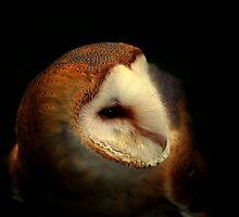 Barn Owl  by larry flewers