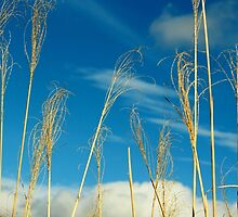 Wheat In The Sky by Cynthia48