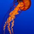 Jelly Fish by Jonathan Epp