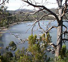 View through a tree - Eggs and Bacon Bay by Goggo