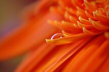 Orange Juice by Gayle Dolinger