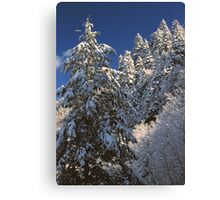 WINTER TREES,GREAT SMOKY MOUNTAINS NP Canvas Print