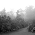 Gardens in Fog by Catherine Davis