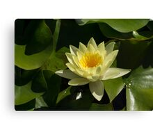 Waterlily in Yellow Canvas Print